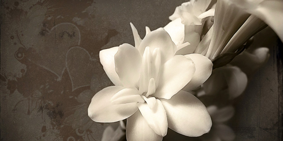 White_Flower_wallpaper